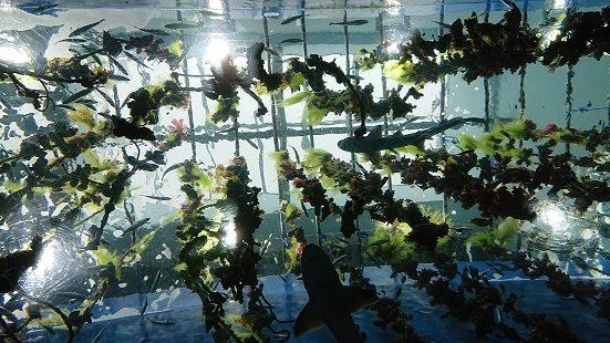 サメと海藻